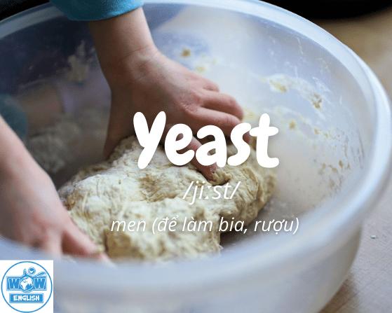 Những từ tiếng anh bắt đầu bằng chữ y - Yeast