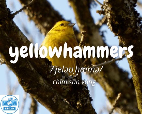 Những từ tiếng anh bắt đầu bằng chữ y - Yellowhammers