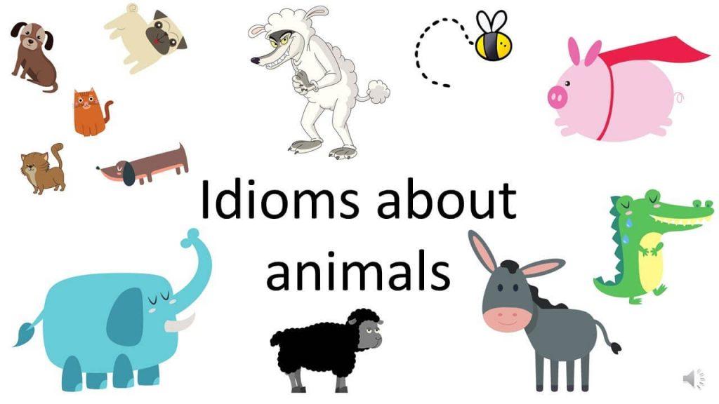 Tổng hợp Idioms Ielts chủ đề Animals (Phần 1)